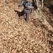 """Le foglie hanno completamente sommerso per lunghi tratti la mulattiera e i sentieri. La mancanza di precipitazioni e l'azione del forte vento di questi ultimi giorni hanno trasportato le foglie rendendo in alcuni punti più """"insidioso"""" il progredire."""