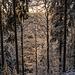 Nun rechts herunter auf einem Pfad, den ich unter der Schneedecke nur erahnen kann. Die Sonne zaubert ihr Morgenlicht in den Wald hinein, alles schimmert.