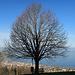 Baum mit Aussicht, Sitzbank auf dem Fronberg
