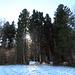 Am Fronberg geht der Wanderweg in den Wald hinein