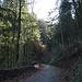 auf dem Wanderweg im Wald am Rorschacherberg