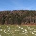 der Haldenwald