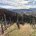 Hier gut zu erkennen: der Baumbestand am Kamm der Weinberge setzt sich meist waldig auf die sonnenarme Nordseite fort, während die sonnen-exponierten Süd- und Südwest-Flanken natürlich perfekte Bedingungen für den Weinbau bieten, hier um Oberkirch ist es überwiegend die Rebsorte Spätburgunder.