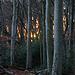 Sonnenuntergang im Wald auf der Schauenburger Flue.