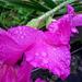 Benetzte Pflanzen (Foto [U sglider])