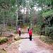 Weiter geht's durch den verwunschenen Wald.