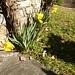Schon Frühling