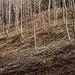 Der Wald vom Wartenberg, wie hier auf der Nordwestseite, ist Naturschutzgebiet und wurde im unteren Teil jüngst durch Fällen von einigen Bäumen und sträucher lichtdurläsiger gemacht. Es ist Buchenmischwald mit Linde, Eiche, Esche, Bergahorn, Mehlbeere und Föhre und typisch ausgebildeter Krautschicht.