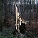 Der Sturm hat im Wald bei Ättenberg ein vergängliches Kunstwerk geschaffen.