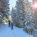 Ab durch den Wald, dem offiziellen Schneeschuhpfad entlang.
