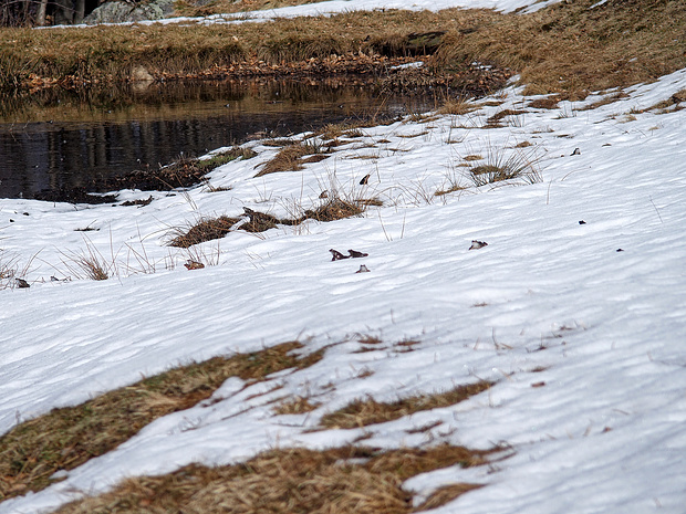 Frösche im Schnee