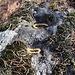 Opfergaben im Schalenstein