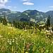 Wunderschöne Alpenblumenwiesen.