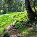 Auf dem bewaldeten und teils sumpfigen Rücken des Hochschelpen.