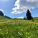 Wollgras & Orchideen - was für eine Kombination :-)