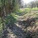 der Weg zum Pfad, der abwärts zum Weiler Wehr führt.