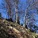 ein steiler, beinahe wegloser Aufstieg zum letzten Gipfel ...