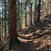 danach ist noch ein Waldstück zu durchfahren bevor man zur Zürchersmühle hinunter fährt.