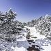 Dieser Pfad (und weiter rüber zum Schliffkopf) ist auch als Schneeschuh-Trail ausgeschildert.