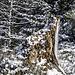 """Wir steigen wieder etwas in die Höhe und kommen durch ein Gewann, das auf den Karten den schönen Flurnamen """"Heibeermauer"""" trägt. Tatsächlich wachsen in den Hängen sommers Massen an Blaubeeren. Heute liegt der Fokus aber auf diesem interessant verwitterten Baumstumpf."""
