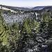 """Auf der Ostseite des Vogelskopfs blicken wir über das Kar """"Ruhesteinloch"""" hinüber zur Passhöhe Ruhestein. Dort befindet sich das Nationalparkzentrum."""
