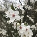 weitere der herrlichen Blüten ...