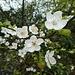 wunderschöne Blüten ...