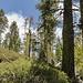 So sieht's weiter oben aus, wo der Trail aus dem Tal heraus auf die Hochfläche trifft