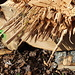 abgerissenes Holz