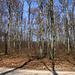 Irgendwo in diesem Wald mit viel Unterholz suchte ich nach dem höschsten Punkt vom Gspänig (607m).