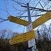 Wegweiser am Hofgut Bronnen. Unser Ziel der Alpenblick. An manchen Wegweisern befinden sich auch Schilder anderer Wanderorganisationen, deren Routen zu den Zielen nicht immer ganz identisch sind. Dazu gibt es noch ganz alte Symbole.
