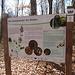 Insgesamt kommt man an 17 Tafeln vorbei, die den Wald und die Natur erklären und zum Mitmachen und Entdecken animieren