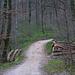 Durchs Zwüschental fuhr ich von Zeiningen ich Waldwegen hinauf bis unter den Chlein Sunneberg wo ich mein Fahrrad deponierte.