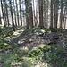 Gipfelbereich des Hornenbergs mit einem Gemäuer.