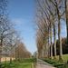 """die Bäume stehen wie """"Soldaten"""" am Strassenrand, - auf dem Weg hinunter nach Roggwil"""