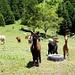 Keine schweizer Kühe, Schaafe oder Ziegen...