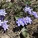 ... überführt zu lieblichen Frühlingsblümchen ...