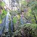 Beim ersten Wasserfall unterhalb der Sunneweid, die Treppe ist mit einem Fixseil versichert.