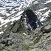 Der Abstieg zum kleineren Nebelgipfel des Schwarzhorns.