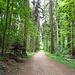 durch den schönen Weierholz Wald fahre ich nach Roggwil