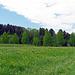 """von Esserswil fahre ich auf einem """"wilden"""" Wanderweg nach Winden, leichte Wanderspuren sind im hohen Gras auszumachen."""