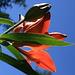 Feuerlilie I