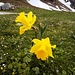 Neben dem Fahrweg, über den ich zurückgehe, stehen diese Blumen.