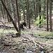Waldhexen sieht man heutzutage nicht mehr viele.