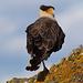 Noch ein grosser Vogel bei der Laguna Azul
