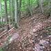 auf schönem Waldweg geht`s aufwärts