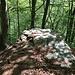 Lo sguardo è attratto da questa roccia che pare concentrare tutta la luce del bosco