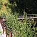 Brücke am Tracciolino