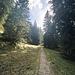 schöner Weg nach dem Schwarzberg in Richtung Sattel vor dem Geißwiedenkopf