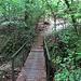 Il ponticello sul Rio Boscaccia.